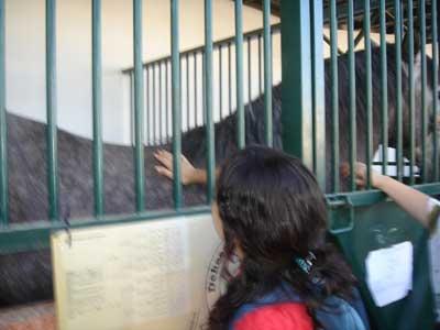 la primera vez que toqué un caballo yo me llamaba ilusión